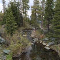 Near Frazier Falls in the Plumas Nat'l Forest.
