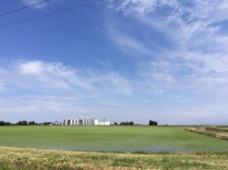 Sacramento Valley Rice Fields